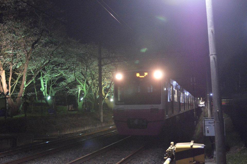 松戸駐屯地ライトアップ桜並木ライトアップ