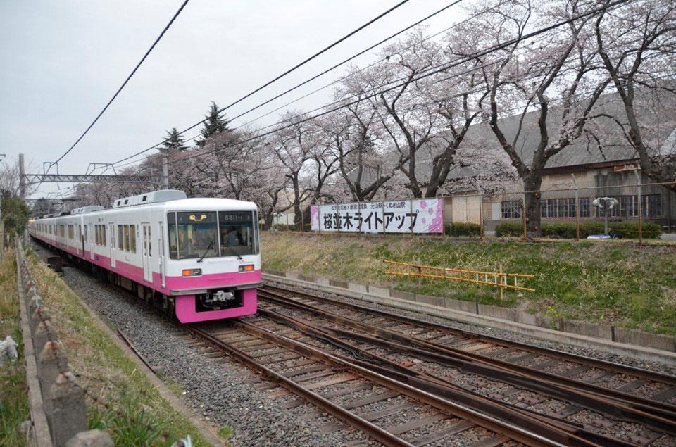 松戸駐屯地くぬぎ山桜並木